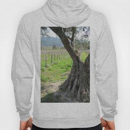 Olive tree in vineyard Hoody