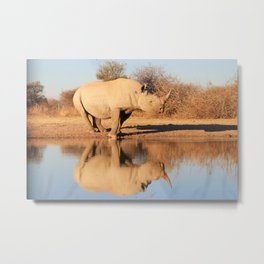 Black Rhino - Powerful and Strong Metal Print