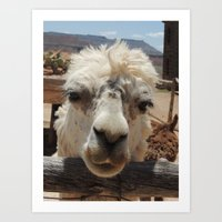 lama Art Prints featuring Lama  by Ricarda Balistreri