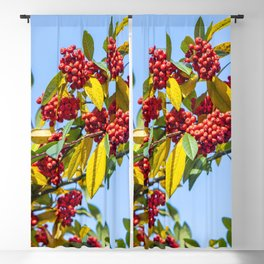 Red Winter Berries Blackout Curtain