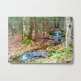 Nature's walk Metal Print