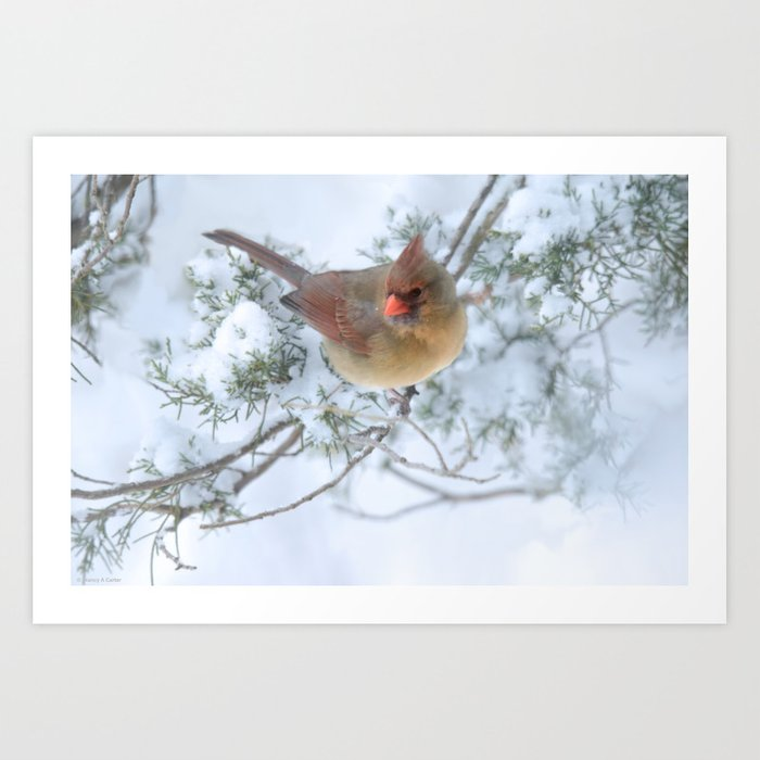 Drifting (Northern Cardinal) Art Print