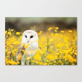 Australian Barn Owl (Tyto Alba) Canvas Print