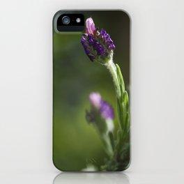 lavendula - I iPhone Case