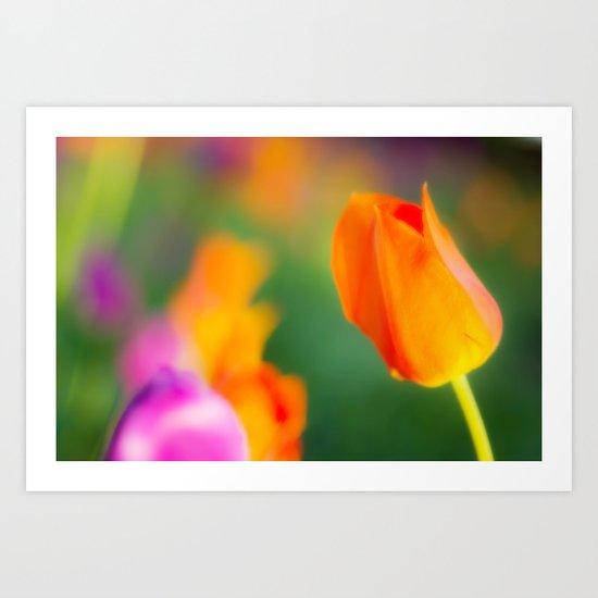 Spring beauties Art Print