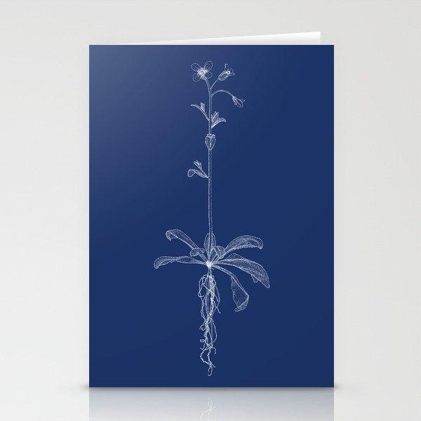 Arabidopsis (Blueprint) Stationery Cards