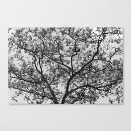 Acacia Abstract Canvas Print