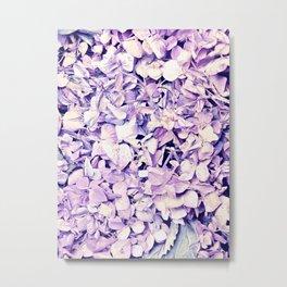 Lavender flowers. Metal Print