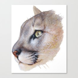Ares Cougar Canvas Print