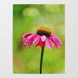 Pink Pop Coneflower Poster