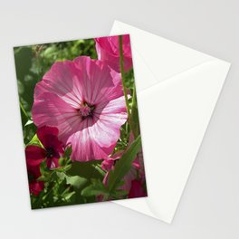 summer mallow VII Stationery Cards