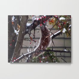 Winter Squirrel (2) Metal Print