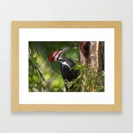 Pileated Woodpecker 6340 Framed Art Print