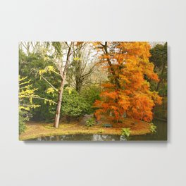 Willow in Autumn colors Metal Print
