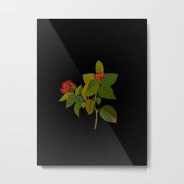 Lantana Mary Delany Vintage Floral Collage Botanical Flowers Black Background Metal Print
