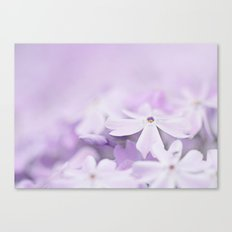 Purple Phlox Canvas Print