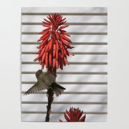 small bird in the country style white wood red flower Poster
