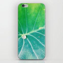 Kalo Pulu iPhone Skin