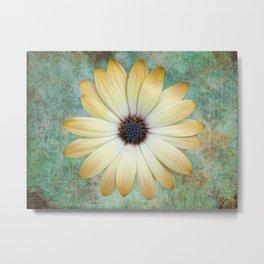 Cream Coloured Daisy Metal Print