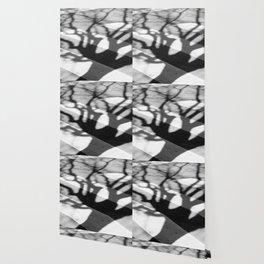 zebra crossing, tree shadow Wallpaper