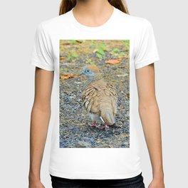 Zebra Dove T-shirt