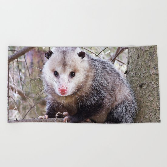 Possum Staredown Beach Towel
