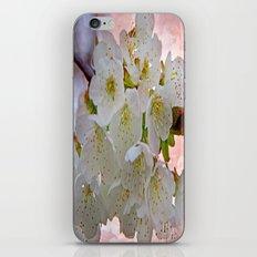 Cherry Blossom iPhone & iPod Skin