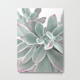 plants succulents and velvet Metal Print