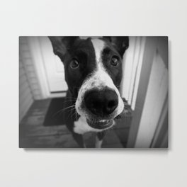 Goof Ball- Abby the Rescued Dog Metal Print