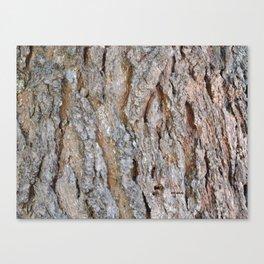 TEXTURES -- Big Cone Pine Bark Canvas Print