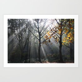 Autumn Sunbeams Art Print