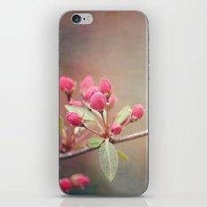 Birthday Buds iPhone & iPod Skin