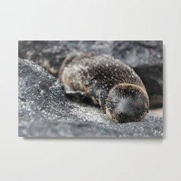 Baby sea lion sleeping on beach Galapagos Metal Print
