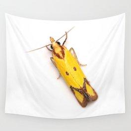 Sulphur Knapweed Moth (Agapeta zoegana) Wall Tapestry