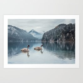 Couple of swans, Alpsee lake Art Print