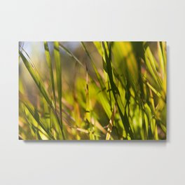 Grass close up shot with sunshine Metal Print