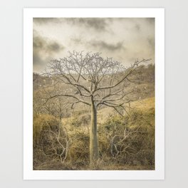 Ceiba Tree at Forest Guayas Ecuador Art Print