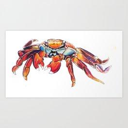 Lightfoot Crab Art Print
