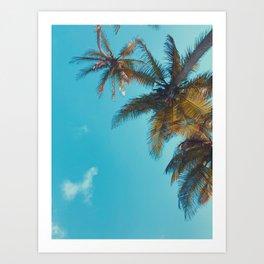 Palmeras Caribeñas Art Print