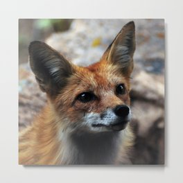 Gentle Fox Metal Print