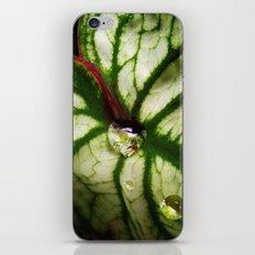 Leaf with Rain Drops iPhone & iPod Skin