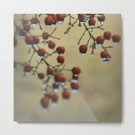 Wet Berries 1 Metal Print