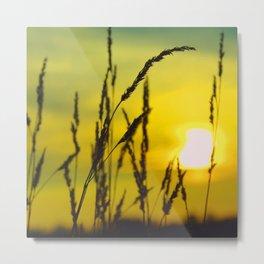Last of Summer II Grass Metal Print