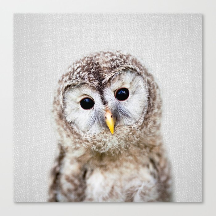 Baby Owl - Colorful Canvas Print