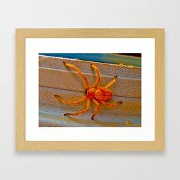 Canyon Spider Framed Art Print