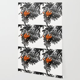 Red Rowan Berries In Black And White Background #decor #society6 Wallpaper