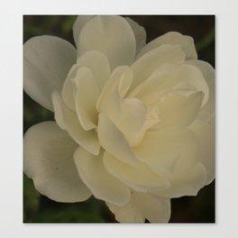 White Rose side Canvas Print