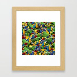Parrots collage birds photo print parrots pattern green blue red yellow Framed Art Print