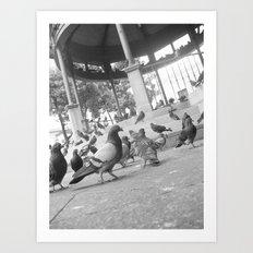Pigeons at the plaza Art Print