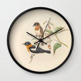 043  Ochre collared Monarch arses insularis4 Wall Clock